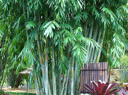 Sensational feature plant
